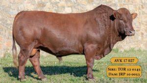 Bulls with Sire & Dam13