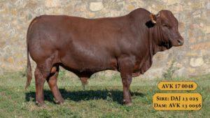 Bulls with Sire & Dam16