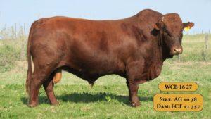Bulls with Sire & Dam18