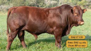 Bulls with Sire & Dam19