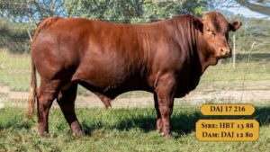 Bulls with Sire & Dam3