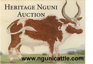 Heritage Nguni