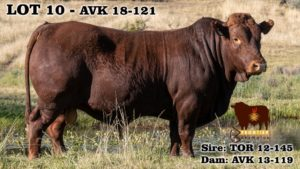 Lot 10 - AVK 18-121