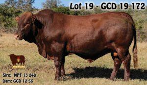 Lot 19 - GCD 19 172