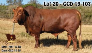 Lot 20 - GCD 19 107