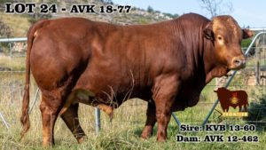 Lot 24 - AVK 18-77