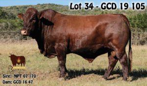 Lot 34 - GCD 19 105