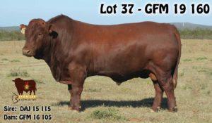Lot 37 - GFM 19 160 (2)