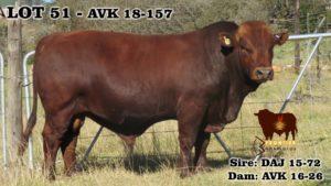 Lot 51 - AVK 18-157