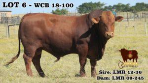 Lot 6 - WCB 18-100