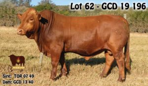 Lot 62 - GCD 19 196