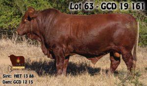 Lot 63 - GCD 19 161