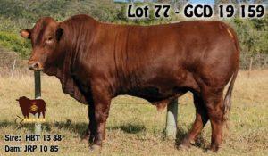 Lot 77 - GCD 19 159