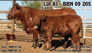 Lot 81 - BBN 09 205