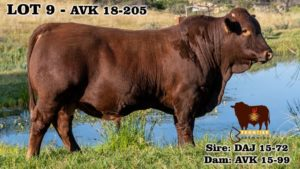 Lot 9 - AVK 18-205