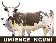 Umsenge_logo