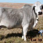 Lot 30 - OBS 7 15