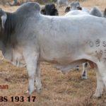 Lot 65 - OBS 193 17