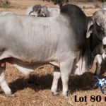 Lot 80 - OBS 68 17