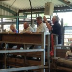 Auctioneers at the Charlgrove Sale