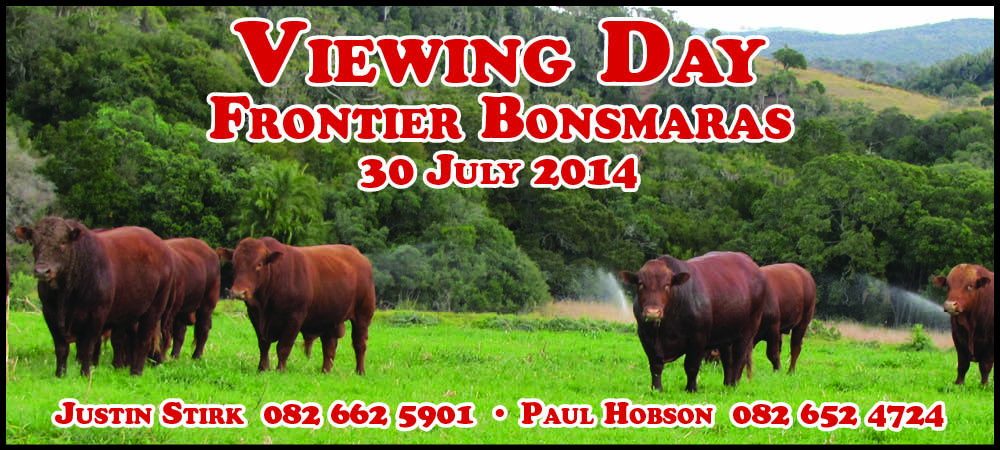 Frontier Bonsmara Bull Viewing Day