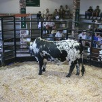 All bulls averaged R21181.81
