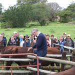 Ian Walsh addressing the crowd and doing a practical demonstration on the Handley Bulls (Which are going to be on sale in August)
