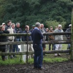 Ian Walsh going explaining as he sorted the cattle into various groups