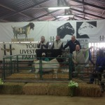 Top Priced Boergoat Rams sold for R14000