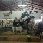 Boergoats on the sale sold by Auctioneer Paul Mills
