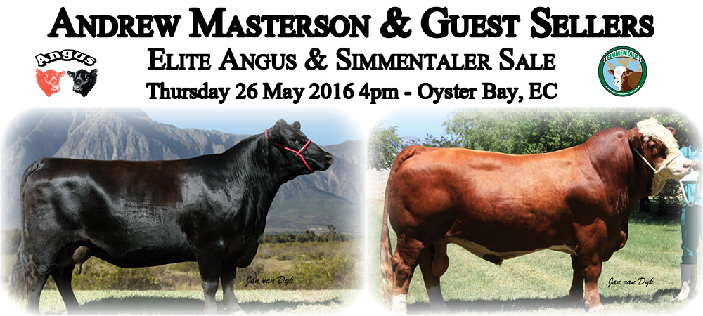 Andrew Masterson Angus & Simmentaler