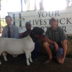 Second Top Priced Dorper Ram sold for R17000