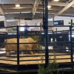Top Priced bull, Lot 7, sold for R90000 to Margie Havey