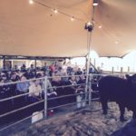 Black Angus Lot 1 sold for R45000