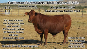 Cattleman Beefmaster Total Dispersal Sale