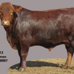 Lot 12 - Cattleman - CM 16 0007