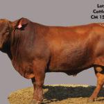 Lot 15 - Cattleman - CM 15 0205