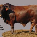 Lot 4 - Cattleman - CM 16 0060