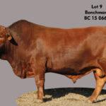 Lot 9 - Benchmark - BC 15 0662