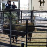 Highest Priced bull lot 6 sold for R72000