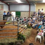 Amberdene Beefmasters averaged R36739.13 with a top price of R52500