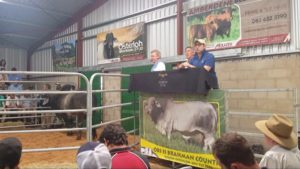 Osterloh Brahmans averaged R35863.63 with a top price of R57500