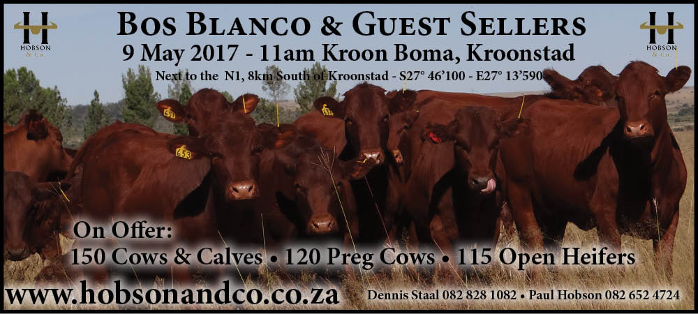Kroonstad Sale Slider