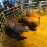 Frontier Bulls on offer being discussed with the group