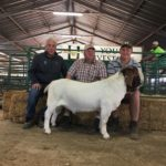 Top Priced Boergoat Ram sold for R29000 by Kobus Lotter and bought be Chippie Poultney