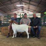 Top Priced Boergoat ewe sold for R4800 by EK Poultney (Chippie)