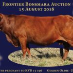 Lot 72 - Golden Oldie JRP 06 39