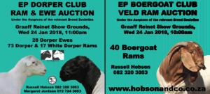 EP Dorper & EP Boergoat