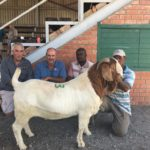 Top Priced Boergoat Ram sold by Hennie le Roux for R16500 to Jimmy Maseko of Botswana