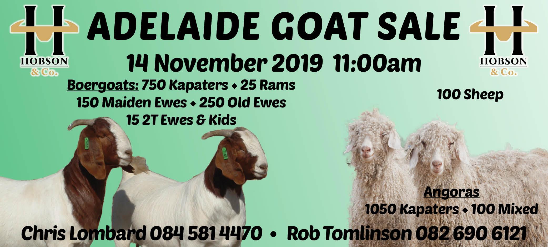 Adelaide Goat Sale Slider